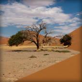 prev_namibia2
