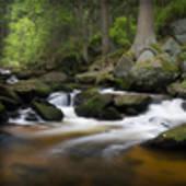 prev_wildewasser